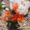 virág a kövek között