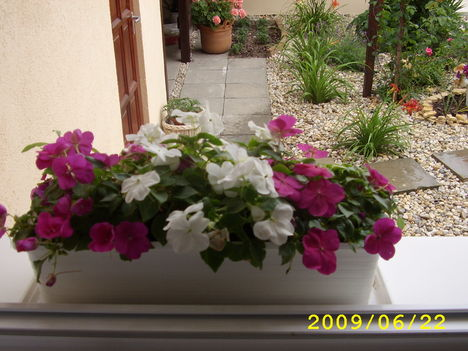 pistike virág az ablakban
