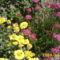 sárga és rózsaszin