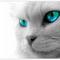 Fehér cica
