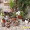 kaktuszok élvezik a napot