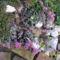 sziklakerti növény még nyilik a napon