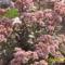 sziklakrti növény még nyilik