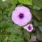 flóra+virágok 027