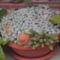 flóra+virágok 061
