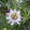 flóra+virágok 062