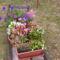flóra+virágok 068