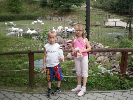 veszpremi állatkertben