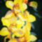 100_7492orchidea