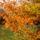 az erdő csoda szép szinei