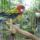 Pityuka a papagájom