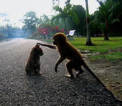 Te ki vagy?... legyünk barátok!