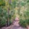 Erdőrészlet
