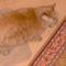 Micka cicám