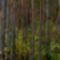 Negyerebe erdő 1