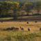 Őszi rét bárányokkal