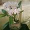orhideak015