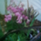 orhideak019