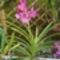 orhideak053