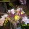orhideak064