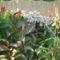 virágcsoport