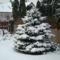 karácsonyi hangulat a kertben. 2