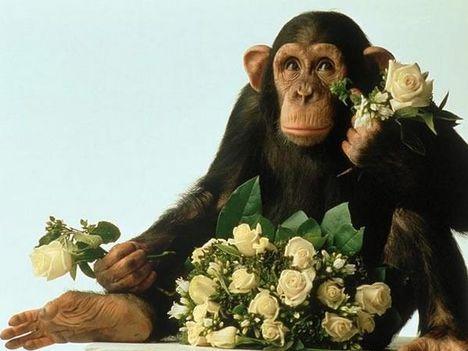 majom virággal
