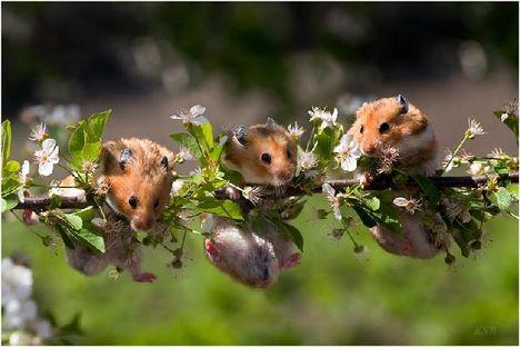 mókuskák
