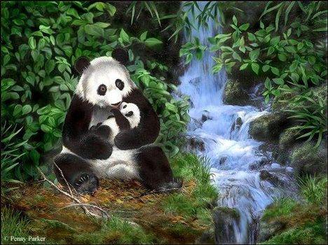 panda család