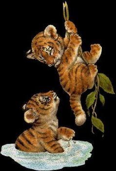 pici tigrisek