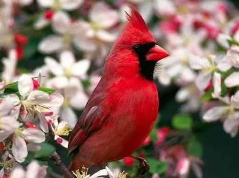 Tavaszi  madárkép