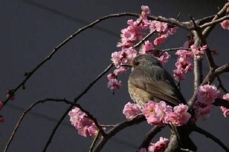 Tavaszi kép