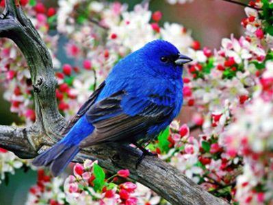 tavaszí madár