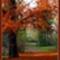 őszi képek3