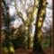 őszi képek9