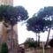 Római  fák...