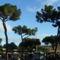 Termini pályaudvar gyönyörű fái