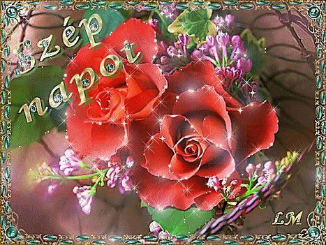 orgonával,rózsa