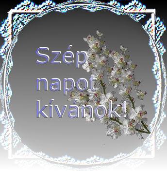 tavaszí sz.n