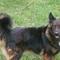 Liza  kutya vagyok szevasztok