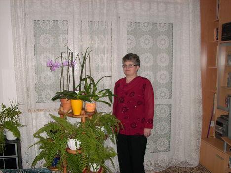 én és a virágaim