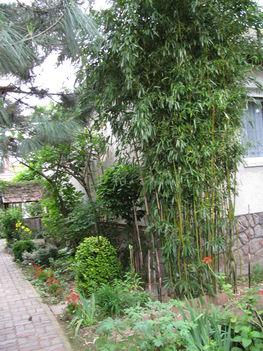 Bambuszok, és fügék