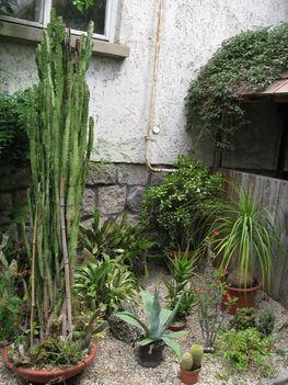 Kaktuszkert,és pozsgások