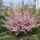 Virágok 014