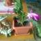 levél kaktusz