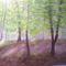 Tavaszi erdő.