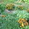 Láncz Gyuláné képei 026