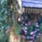 Láncz Gyuláné képei 032