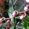 Lepke Orchidea nemsokára másodjára virágzik