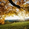 szép ősz
